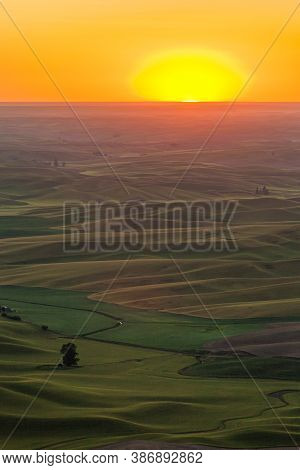 Rolling Green Wheat Fields In The Palouse Region Of Eastern Washington, Usa At Sunset.