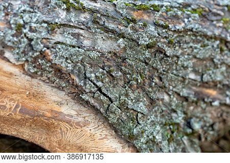 The Bark Of A Tree And And A Drawing On A Log Of A Tree Trunk After Damage Caused By A Bark Beetle.
