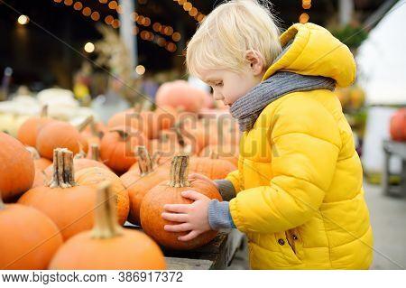 Little Boy Choose Right Pumpkin On A Farm At Autumn. Preschooler Child Hold A Orange Decorative Pump