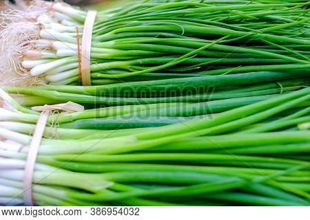Leaf Of Green Onion, Spring Onion, Scallion Display On The Food Market .close Up Shot