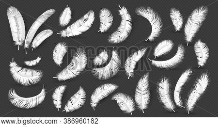 Realistic Feathers. Fluffy 3d Soft White Bird Empennage, Goose And Swan Weightless Plume In Differen
