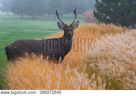 Beautiful Adult Deer With Antlers Stands In The Thickets Of Bright Orange Decorative Spikelets  On C