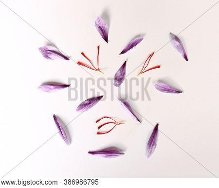 Crocus Sativus, Commonly Known As Saffron Crocus, Or Autumn Crocus. The Crimson Stigmas Called Threa