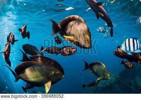 School Of Tropical Fish In Ocean. Underwater Sea World With Fishes.