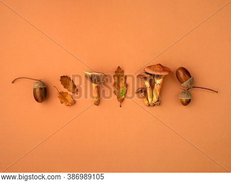 Autumn Background With Various Botanical Stuff Such As Mushrooms, Oak Dry Leaves, Acorns. Compositio