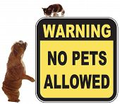 dog and cat chase in a no pets allowed sign poster