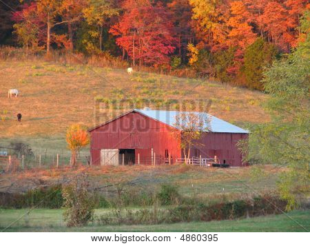 Red Country Barn In Pasture