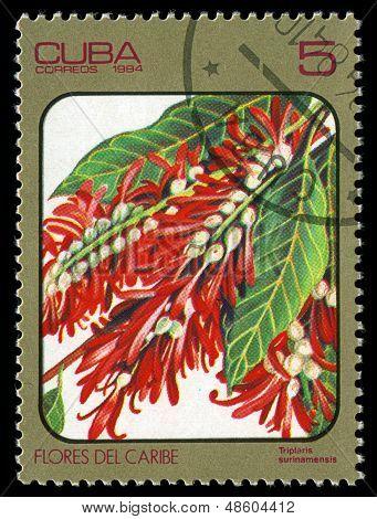 Cuba - Circa 1984: Post Stamp Printed In Cuba Shows Image Of Triplaris Surinamensis From Caribbean F