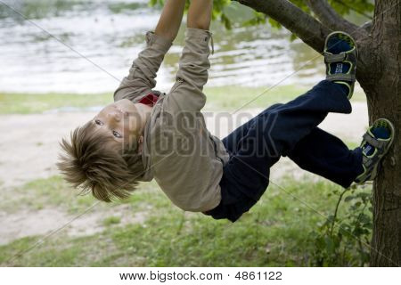 Cute Boy Hanging From Branch Of Tree. Summer Time