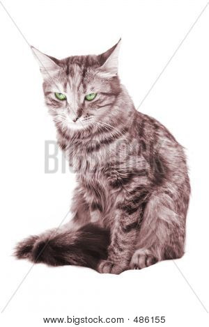 poster of cat with green eyes on white