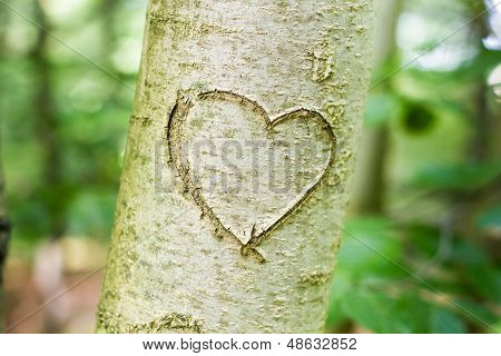 Heart Scratched Into A Young Tree
