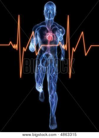 Jogger Vascular System