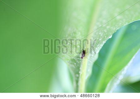 leaf background with earwig
