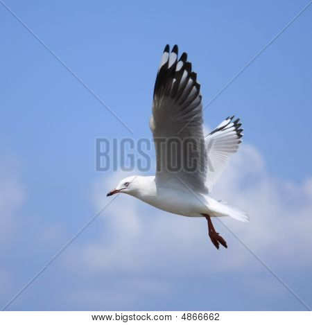 Seagull Flying High On The Wind.