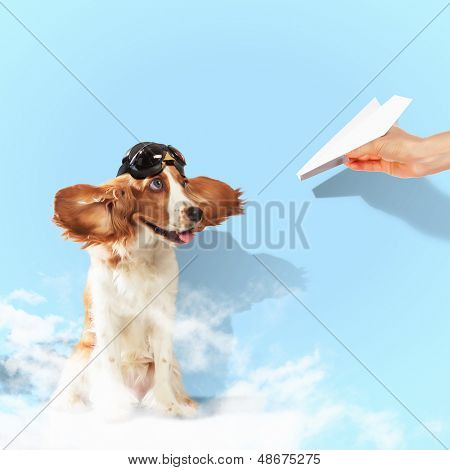 Image of funny spaniel dog in pilot helmet poster