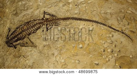 Fossilized animal
