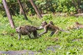 Monkey mother and its baby escaping from male poster