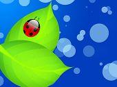 red shiny ladybug on a wet leaf poster