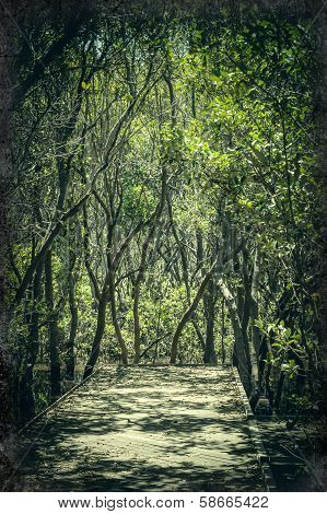 Fairytale-like Pathway Through The Mangrove Forest