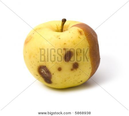 Bad Rotten Apple Isolated