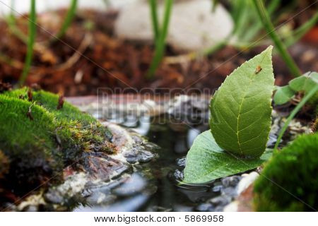 leaves Boat