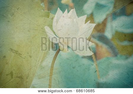 Beautiful White Lotus