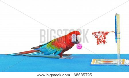 Macaw Playing Basketball Ball Toy Isolated On White