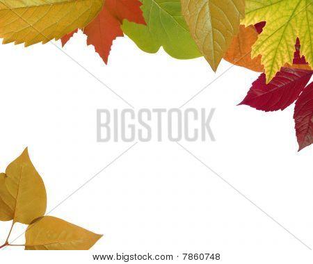 Mixed - Autumn Leaf Frame (XXL)
