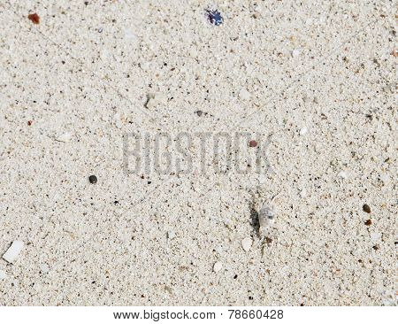 Crab on the white sand on the beach poster