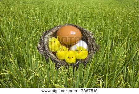 nest it twisted from grass with eggs and chicken poster