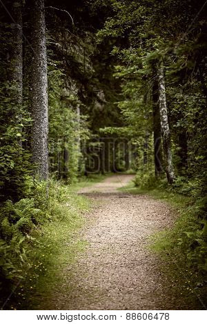 Path winding through lush green forest with tall old trees
