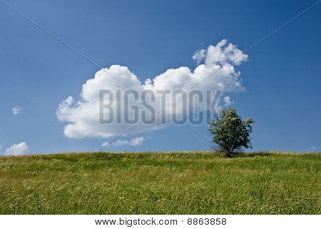 Cloud, Tree And Green Slope
