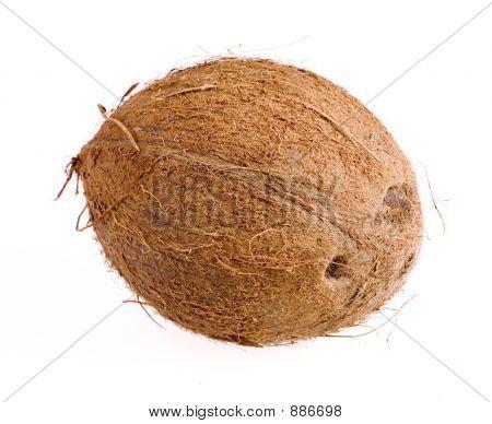 Cocnut Closeup On White Background