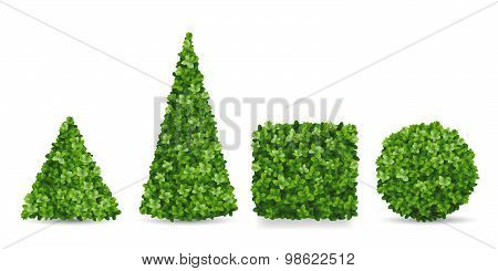 Boxwood Shrubs Of Different Topiary Forms