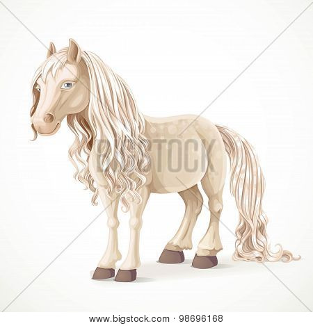 Cute White Pony Horse Isolated On A White Background