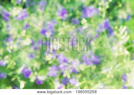 Blurred background of violet flowers in green grass