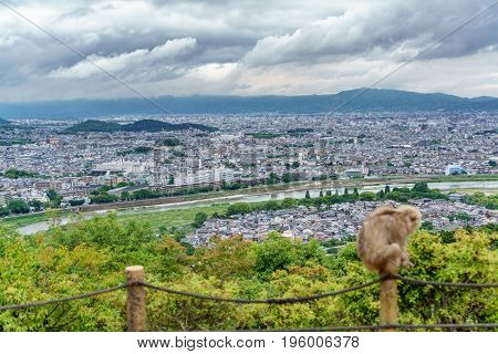 Top view of Kyoto from Arashiyama mountain, cloudy day, blurred monkey
