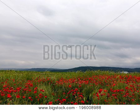 Plane Flies In Cloudy Sky. Flowers Red Poppies Blossom On Wild Field. Beautiful Field Red Poppies Wi