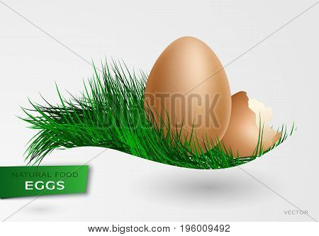 Realistic chickens of egg. Easter, chicken, birth 3D vector illustration