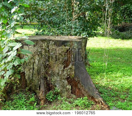 Cut off trunk. Nature. Rural life. Sliced tree