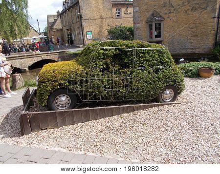Topiary Car, Privets cut into a Leyland mini car shape.