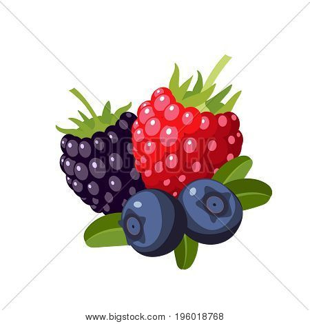 Set of colorful cartoon berries: raspberry blueberry blackberry. Vector illustration flat icon isolated on white.