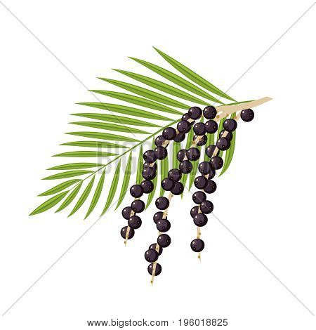 Branch with acai berries and leaves. Vector flat icon illustration isolated on white.
