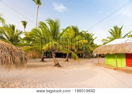 Palm trees and huts in Bayahibe La Altagracia Dominican Republic. Copy space for text