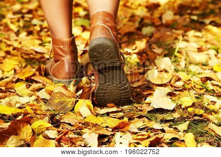 female legs in brown shoes on a background of yellow autumn leaves. women's footwear in the fall outdoor