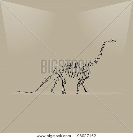Dinosaur skeleton in a museum lighting vector illustration