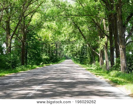 Tunnel Made From Trees Growing Above The Road. Road On A Summer Day. Nature Conceptual Image.