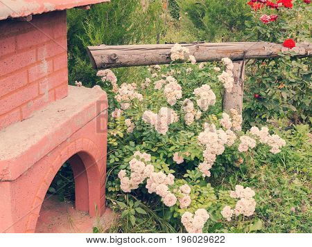 Barbecue In Summer Garden Among Trees And Beautiful Blooming Red, Pink And White Roses.