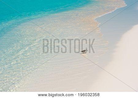 Bird On The Shore Of The Beach Playa Paradise Of The Island Of Cayo Largo, Cuba.