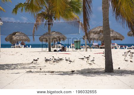 Seagulls On The Beach On The Beach Playa Sirena Of The Island Of Cayo Largo, Cuba. Copy Space For Te